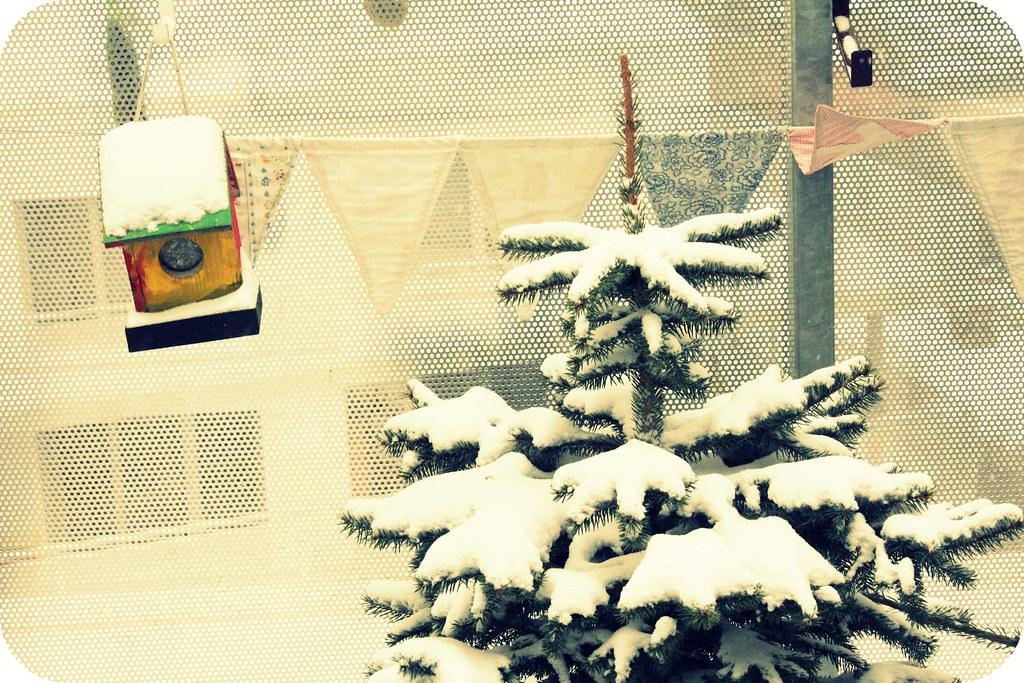 Unser lebender Tannenbaum fürs nächste Jahr
