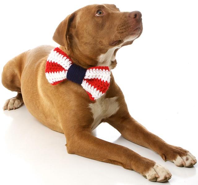 sciarpe-cani-charlie-diesel-03