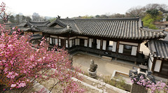 Korea_Changdeokgung_20140407_03