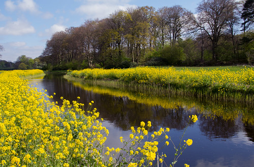 trees flower holland reflection water netherlands yellow clouds river spring bomen nederland wolken lente geel wassenaar bloem reflectie rivier landgoed dehorsten