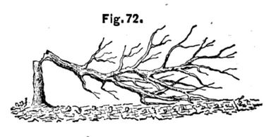 WheelerFig72