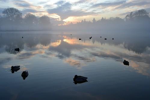 sunset sky cloud sun holland reflection tree water netherlands fog duck nationalpark pond day dusk nederland hogeveluwe dehogeveluwe hoenderloo 荷兰 jachthuissthubertus jachtslotsthubertus 海尔德兰省 sainthubertushuntinglodge