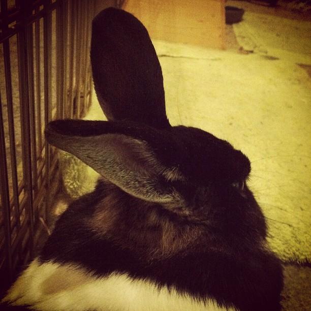 Bunny ears.