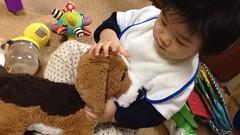 わんちゃんと遊ぶとらちゃん(2011/11/28)