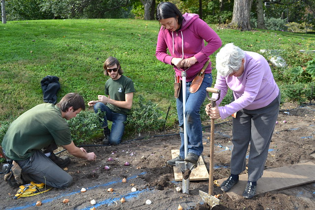 Staff and volunteers worked for days this fall to plant each spring bulb properly. Photo by Elizabeth Peters.