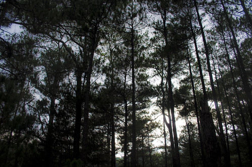 forest in baguio