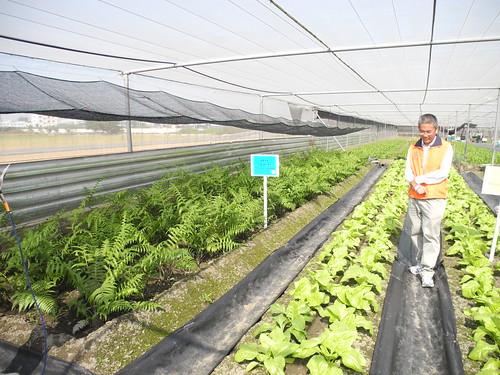 王三太推廣原生蔬菜的好處。