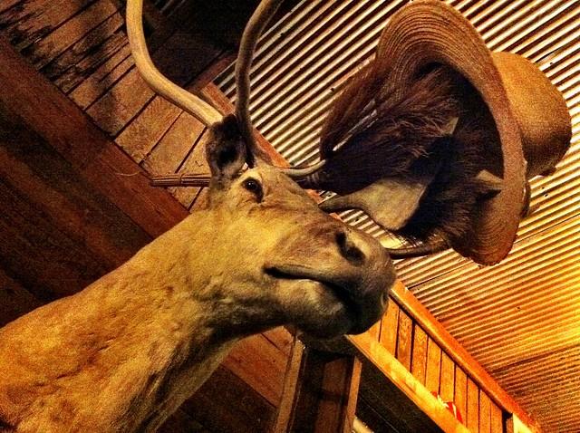 mule deer?