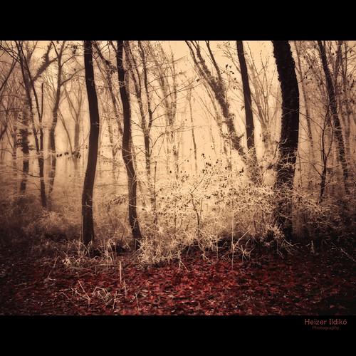 autumn trees light leaves forest woodland woods hungary niceshot természet fa táj köd tájkép ősz tél erdő idream zúzmara canonsx10