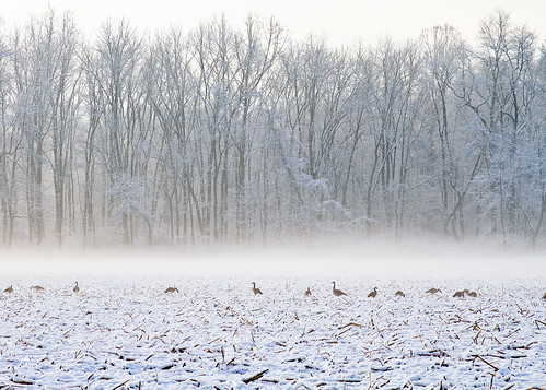 First Snow, Geese, and Fog
