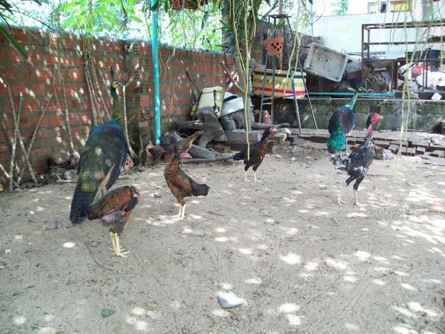 http://farm8.staticflickr.com/7151/6504843623_323efab043_z.jpg