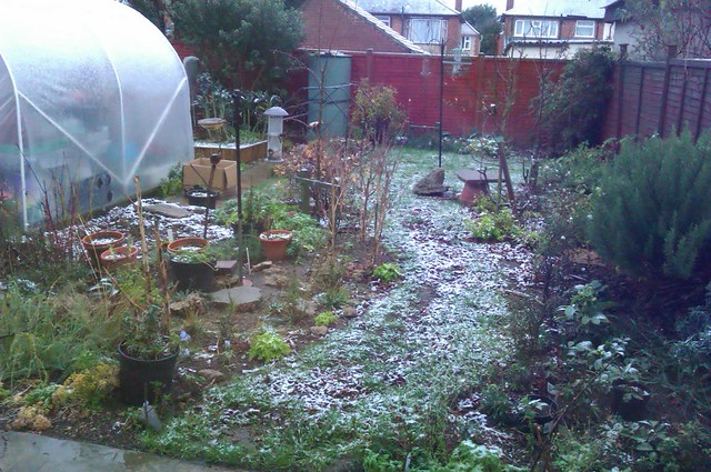 A light dusting of snow over our back garden
