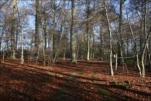 Woodland at Winter Hill, Cookham Dean