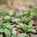 Winter Gardening by ethelgloves