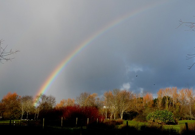 25432 - Rainbow, Llanelli WWT
