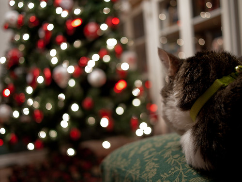Kitteh and the Christmas Tree