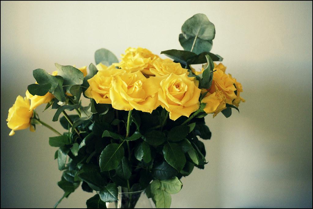 Le rose del 23 Dicembre