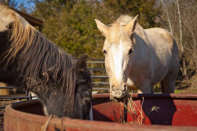 Horses 9749