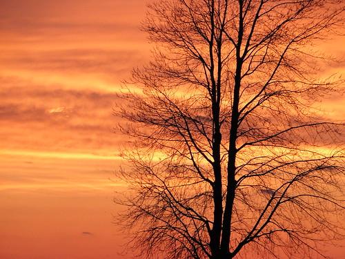 trees sunset sky ontario beach clouds lakeerie