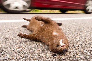 Dead Mink