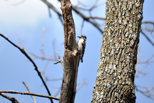 W is for Woodpecker