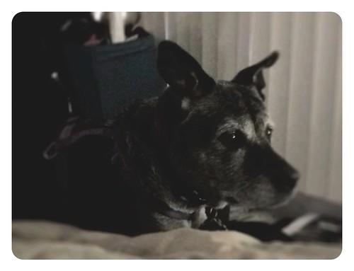 iPhone Max, pet portrait.JPG