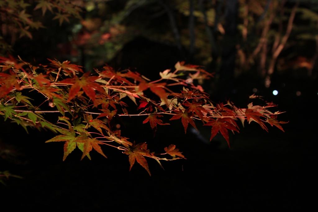 Kyoto Arashiyama tourist guide (7)