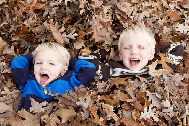leaves_3