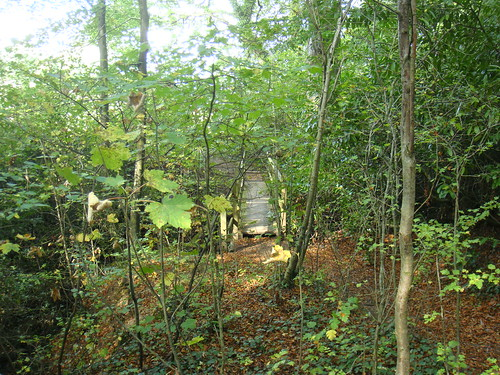 Zona de bosque en los alrededores