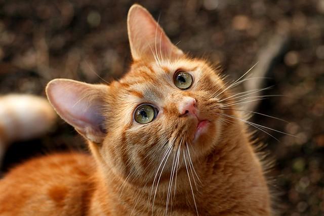 Diamond Cat Food Site Menards Com