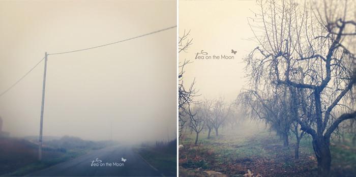Bajo la niebla 4