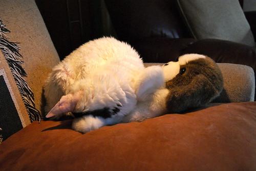 Warm Comfort by susanvg
