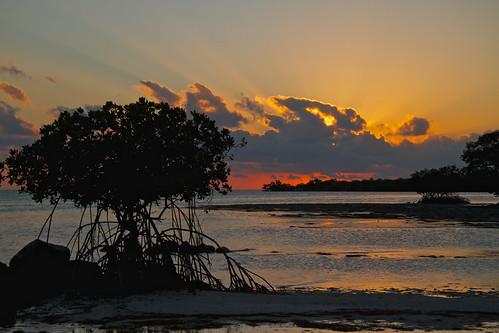 sunset beach gulf unitedstates florida mangrove bigpinekey