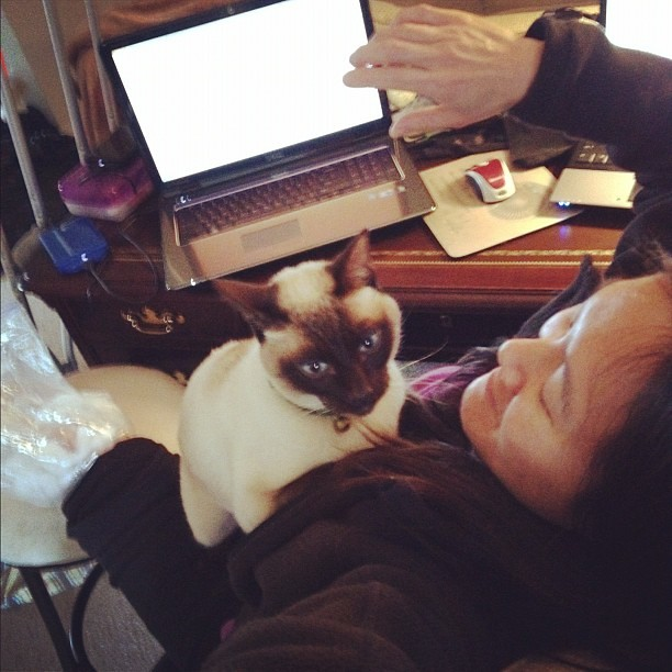 23/365+1 He Was Asleep All Morning Long And Now Wants Attention #cat #siamese #home