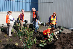 installation of TOTE rain garden (by: Stewardship Partners)