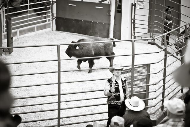 Buffalo Auction