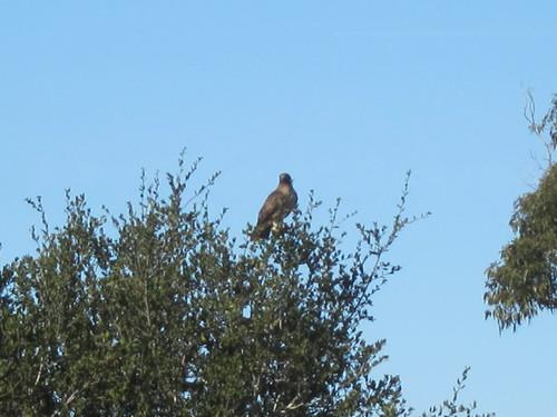 bird IMG_9285