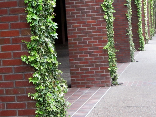 Brick Building Columns and Leaves