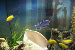fish-tank-aquarium-custom-installed-bradenton-sarasota-florida-4