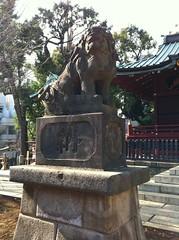 狛犬探訪 金王八幡様