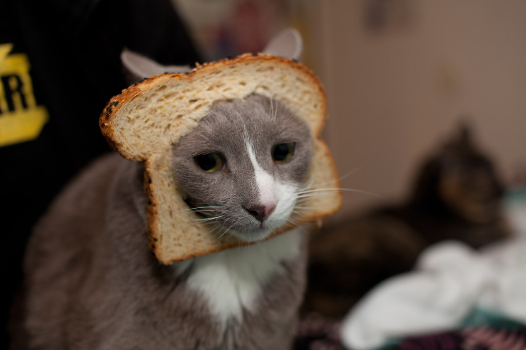 #CCC is a breadcat