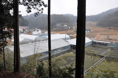 Takigawa Koi Farm