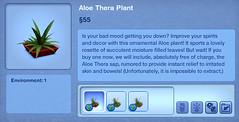 Aloe Thera Plant