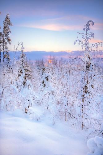trees winter sunset sky snow cold tree nature forest finland landscape geotagged woods frost lumi talvi puu hdr maisema luontokuva metsä taiga luonto naturephotography auringonlasku puita maisemakuva saari mäntsälä puut taivas kylmä tonemapped tonemap pakkanen 3exp hunttijärvi luonnonvalokuvaus terrilänpolku