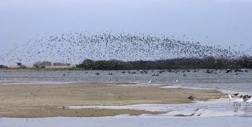Laguna Ñapique - Sechura (Piura)