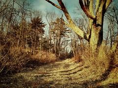 Central Trail @ BMR, 2012/02/03