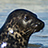 to Cornish Seals' photostream page
