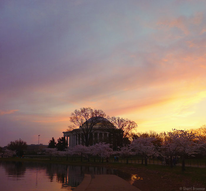 Cherry Blossoms - Tidal Basin, Washington D.C.