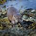 Otter by Karen Miller Photography