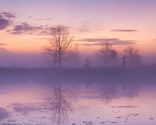autumn mist fog sunrise illinois pond preserves lakecounty specland foggyscenes halfdayforestpreserve lcfpd halfdaypond
